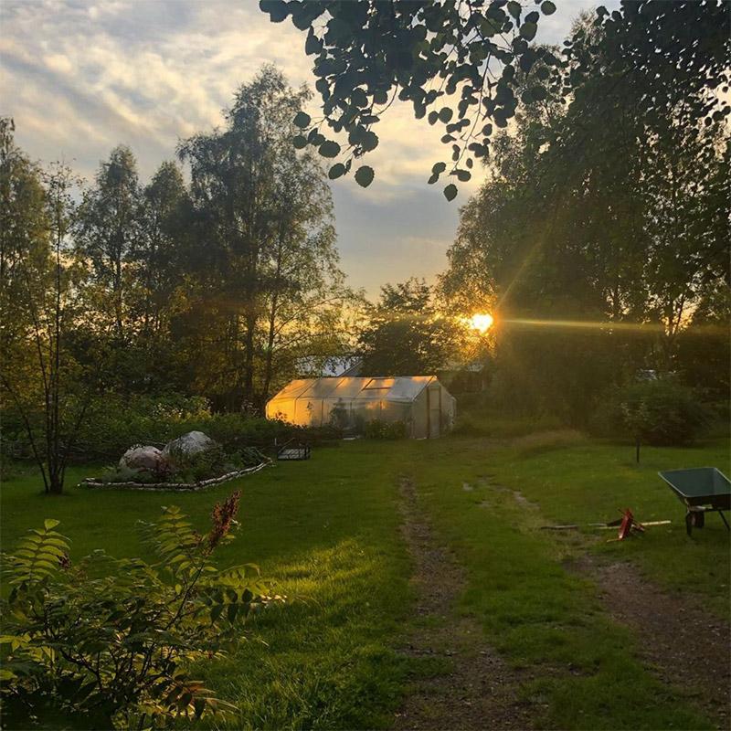Skogsbrynets Trädgård Solnedgång